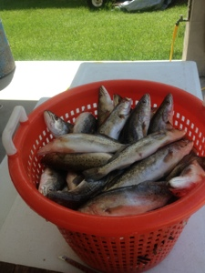 With Basket of Trout from Captain Dave and Pelican State Fishing Charters
